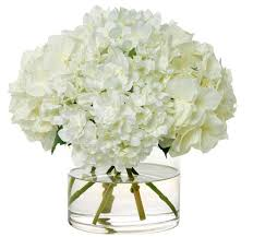 white hydrangeas heavenly white hydrangeas
