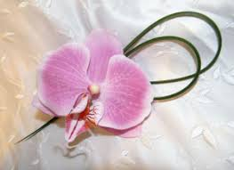 Orchid Boutonniere Boutonnieres For Spring Wedding Accessories Groom Lapel Flowers