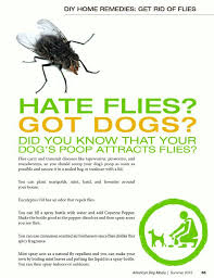 Eliminate Mosquitoes In Backyard by Best 25 Get Rid Of Flies Ideas Only On Pinterest Repel Flies