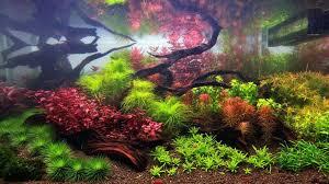 Okeanos Aquascaping 24 Best Planted Tanks Images On Pinterest Aquarium Ideas