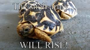 Tortoise Meme - tortoise memes quickmeme