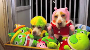 funny cats and dogs wearing cute costumes compilation halloween