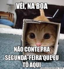 Cute Kitten Memes - okay não conto piadas do gatinho pinterest