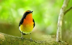 lovely spring bird wallpaper 13 1440x900 wallpaper download