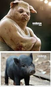 Meme Babi - 5 mitos tentang pesugihan babi ngepet