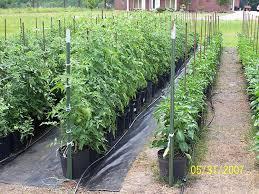 amazon com 6300ft tomato tying garden twine garden u0026 outdoor