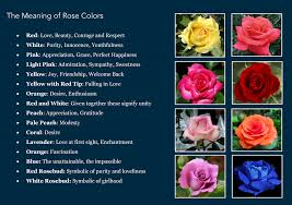 roses colors colored roses their meanings sheet by davidpol