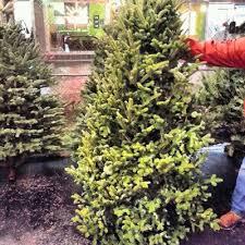 where to buy christmas trees robert dyer bethesda row where to buy christmas trees in bethesda