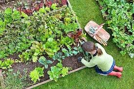 25 tips for starting a small vegetable garden install it direct