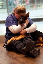 dog euthanasia euthanasia from the veterinarian s perspective dr llera