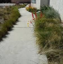 recon native plants angelita daisy u201d caliche challenge