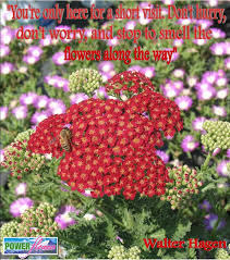 Flower Garden App by Power Flowers Our Favorite Gardening Quotes