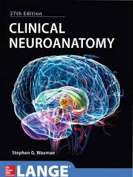 resume templates for administrative officers examsmart hetamines clinical neuroanatomy 27e pdf central nervous system brainstem
