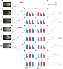 caudal regulates the spatiotemporal dynamics of pair rule waves in