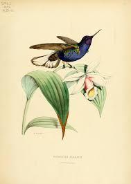au bureau lyon histoire naturelle des oiseaux mouches ou colibris constituant la