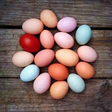Easter Decorations The Range by 12 Blown Eggs From Free Range Chickens Ducks Geese Hand Blown