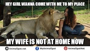 Sex Memes Funny - lion sex memes different types of funny animal memes pinterest