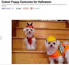 Cute Small Dog Halloween Costumes 20 Puppy Costume Ideas Puppy Halloween
