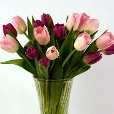 Fresh Cut Flowers Fresh Cut Pink U0026 Purple Tulips Fresh Cut Flowers Tulips Com
