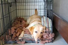 Dog Crate With Bathroom by 4 Future Benefits Of Crate Training Your Puppy