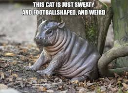 Hippo Memes - this has to be the worst cat ever weknowmemes