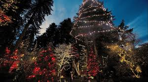 forest living christmas nature tree tallest lights world