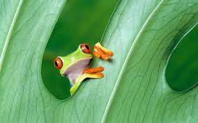 free frog wallpapers and screensavers 52dazhew gallery