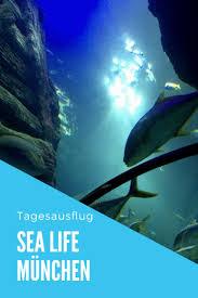 Inges Wohnzimmer Konstanz Die Besten 25 Sea Life Munich Ideen Auf Pinterest Haar