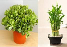 plants for office desk best ideas of office desk plants wonderful office desk lucky plants