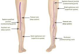 Back Knee Anatomy Rosen Vein Lecture 102 Lower Extremity Vein Anatomy Vein Doctor