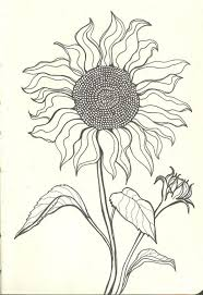 sunflower drawing images drawing art gallery