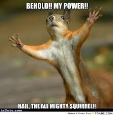 Everywhere Meme Maker - stop squirrel meme generator captionator caption generator