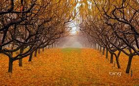 imagenes de otoño para fondo de escritorio paisajes de otoño para fondo de pantalla buscar con google