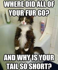 23 best funny images on pinterest funny animals adorable animals