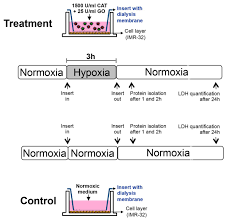 an insert based enzymatic cell culture system to rapidly and
