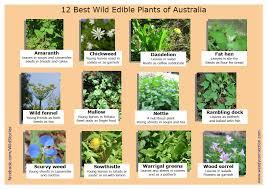australian native edible plants best wild plants permaculture central coast