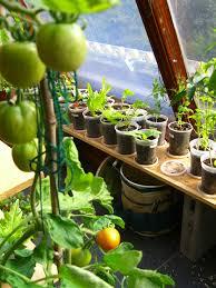 indoor vegetable garden gardening ideas