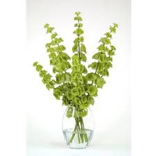 bells of ireland flower waterlook silk green bells of ireland in a glass vase free