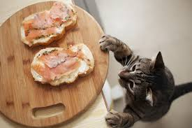 15 human foods that are safe for cats pawculture
