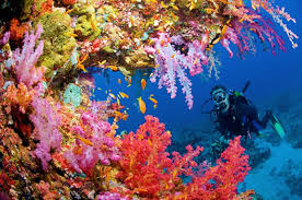 underwater long nature meditation with coral reef youtube