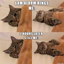 Sleepy Cat Meme - sleepy kitty imgur
