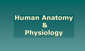 Human Anatomy And Physiology Final Exam Anatomy And Physiology Course Best Way To Study For Anatomy And