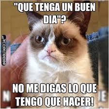Buen Dia Meme - que tenga un buen día grumpycat spanish jokes pinterest