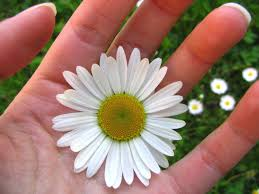 free flower in hand images pictures and royalty free stock
