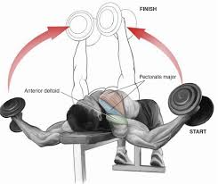 Flat Bench Dumbell Force Your Chest To Grow With A Push And Stretch U2013 Xbodyconcepts