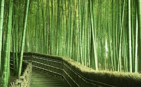 bamboo forest painting wallpaper bamboo drawing beach scene wall murals