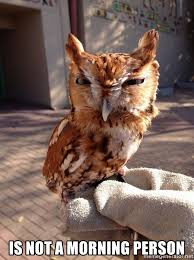 Not A Morning Person Meme - is not a morning person disgruntled owl meme generator