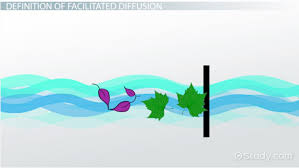 facilitated diffusion definition process u0026 examples video