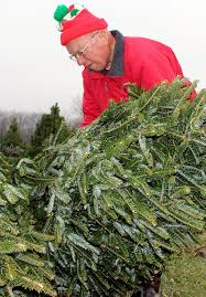 christmas tree farms dayton ohio christmas lights decoration