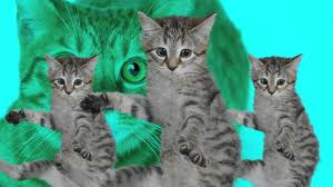 Grumpy Cat Photo 1 Best - best kittycat song official feat grumpy cat youtube